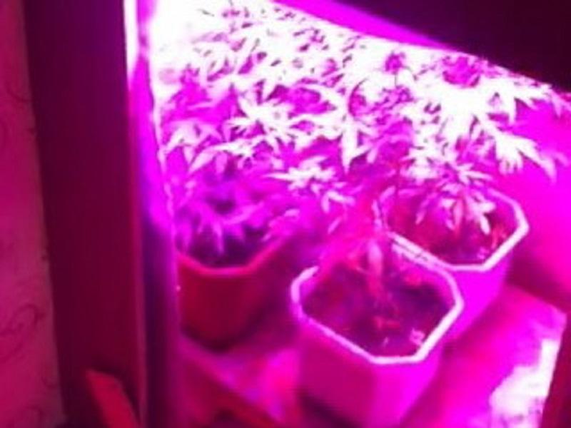 Красный свет для конопли купить тест иммунохром марихуана экспресс
