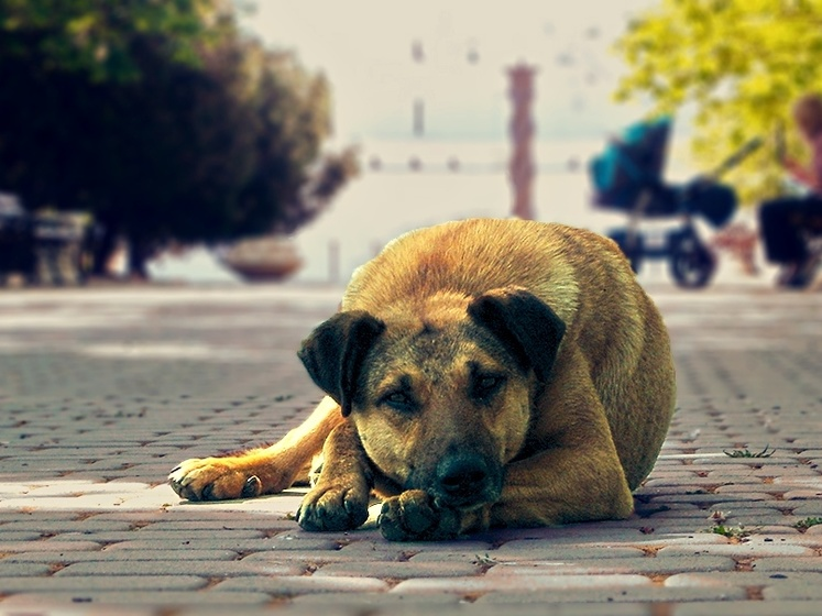 В России принимают закон, ужесточающий наказание за жестокое обращение с животными