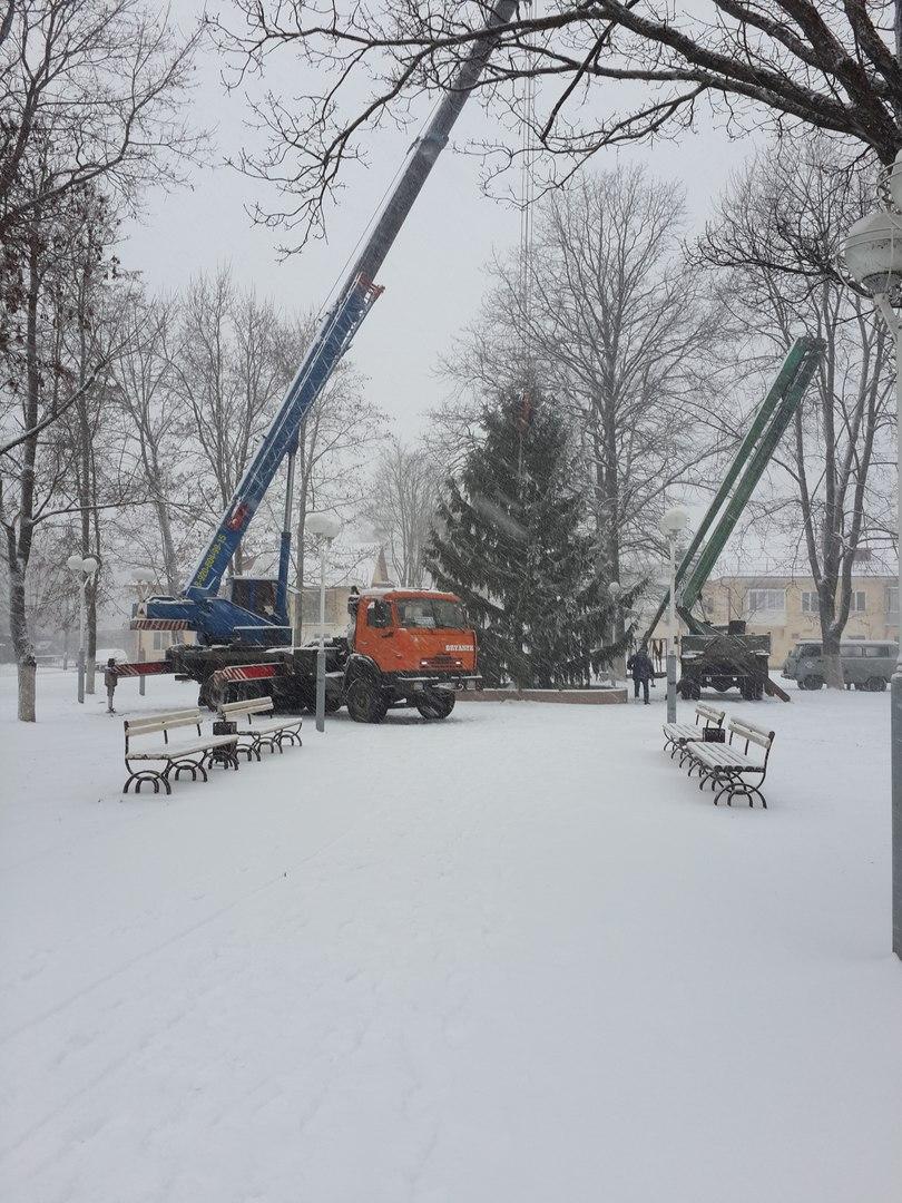 Горожане обвинили власти Брянска в краже новогодней елки