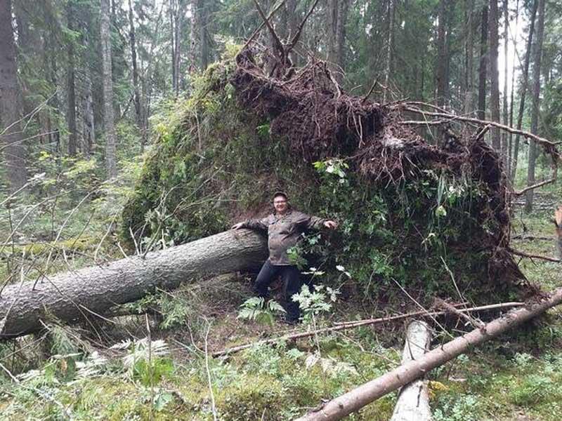 В лесу под Брянском жители нашли огромные корни упавшего дерева