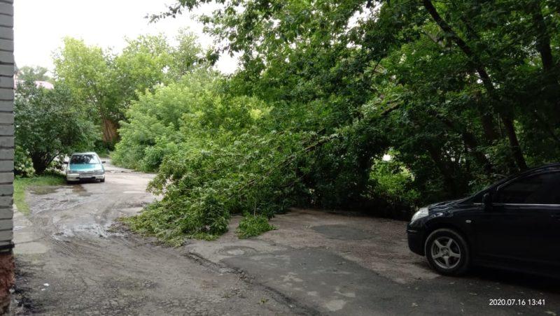 В Брянске после разгула непогоды не прекращают падать деревья