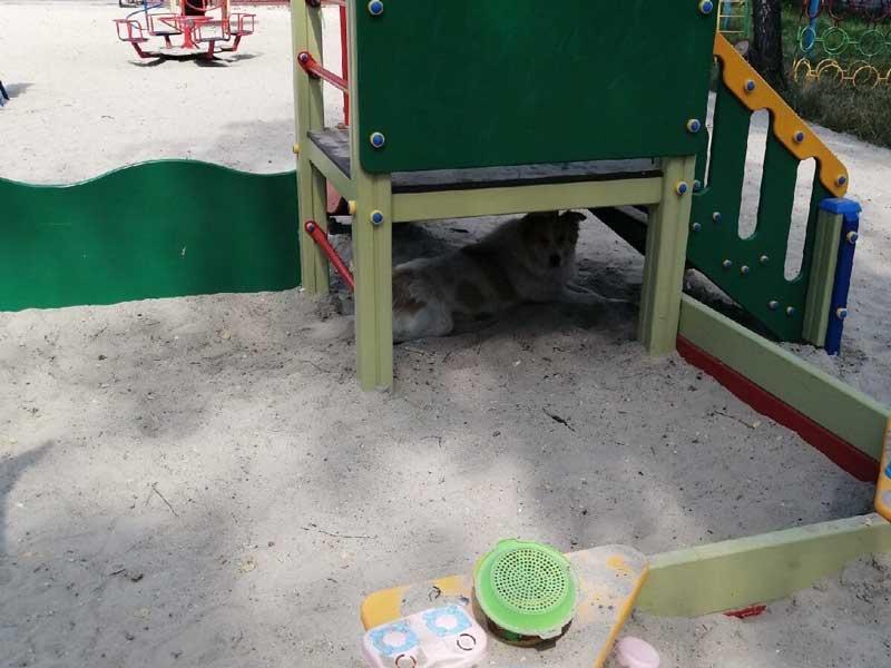 В Брянске на площадках детей покусали собаки
