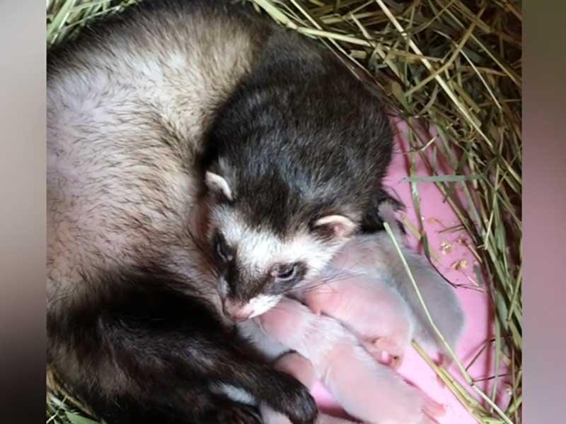 В Брянском зоопарке настал период размножения животных
