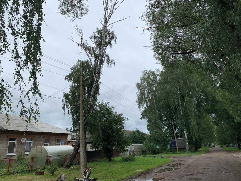 Жизням жителей Брянска угрожает береза на улице Угольной