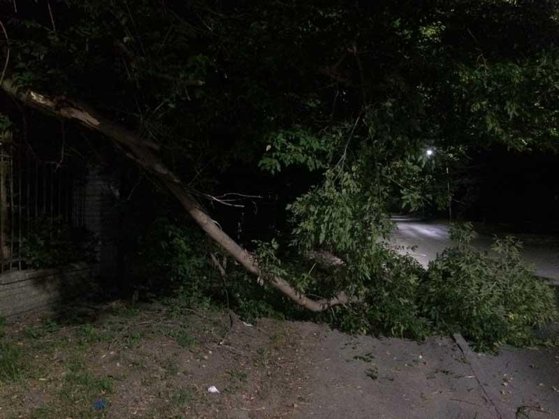 Упавшее дерево на улице Горького в Брянске перекрыло дорогу