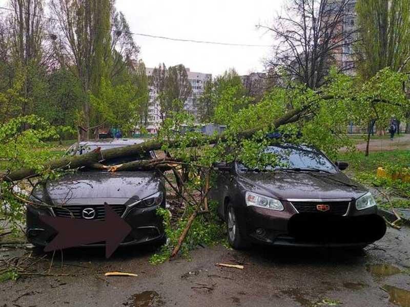 В Брянске дерево упало на две иномарки