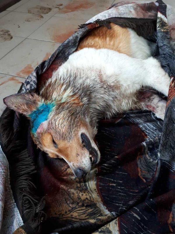 Ужас и собачий террор в поселке под Брянском