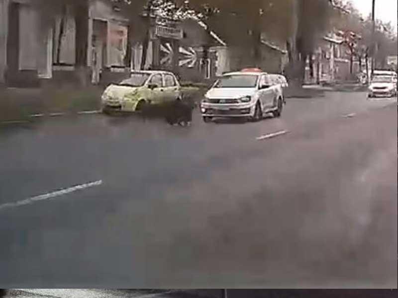 В Брянске таксист сбил барана на Красноармейской