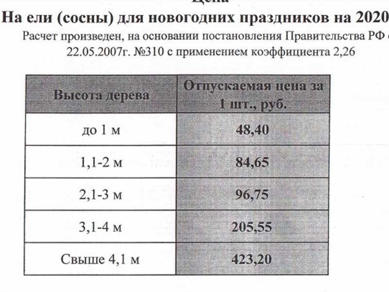 В брянском лесничестве опубликовали цены на ёлки