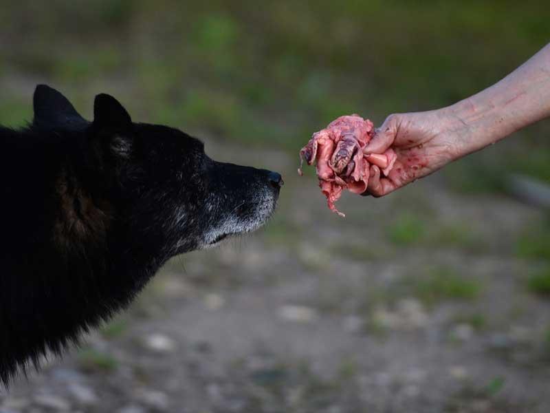 Об убийствах собак в Советском районе предупредили жителей Брянска