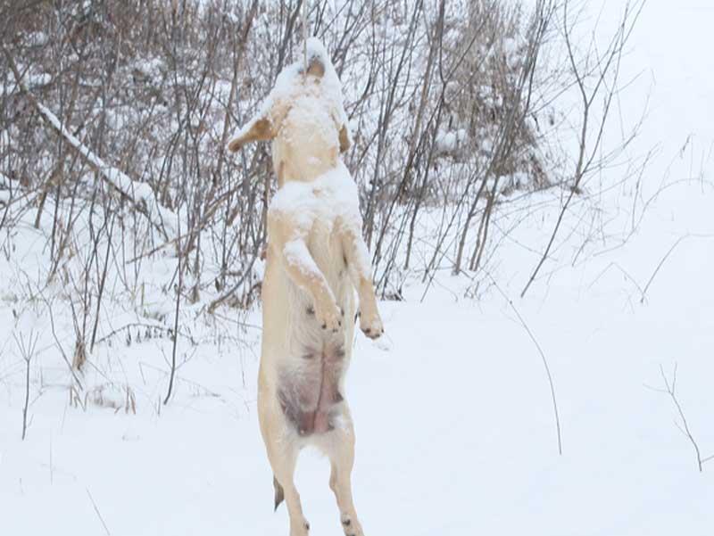 В Брянске во дворе многоэтажного дома в Фокинском районе живодеры повесили собаку