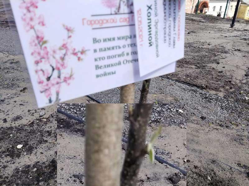 На зло экологу-агроному и журналисту в брянском «Саду Победы» распустился первый саженец