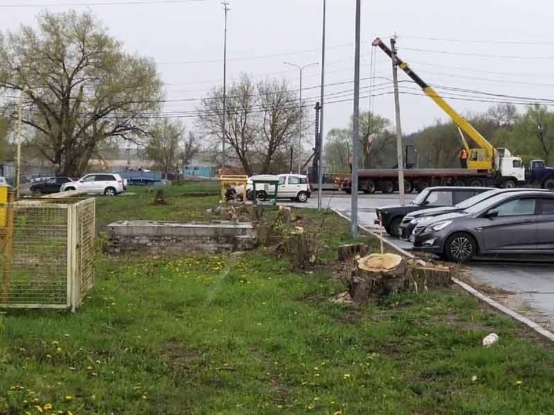 На набережной в Брянске выпилили более 10 деревьев